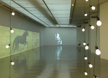 Sturtevant - Musée d'Art Moderne de la ville de Paris
