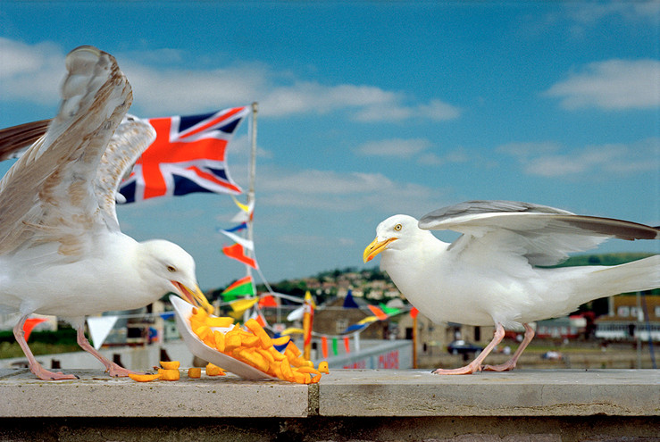 Martin parr   westbay original large2