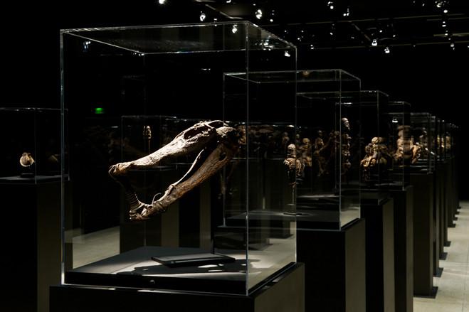 Vaudou - Fondation Cartier pour l'art contemporain