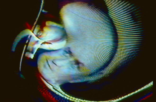 Vidéo Vintage - Centre Georges Pompidou