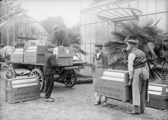 Ananas Connection - Muséum national d'Histoire naturelle — Grande galerie de l'évolution