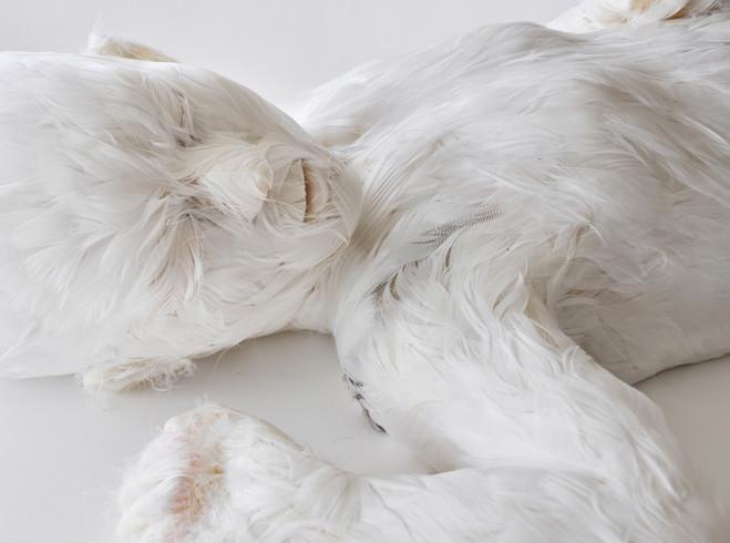 Lucy Glendinning - Galerie Da-End