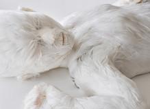 Lucy Glendinning - Da-End Gallery