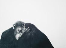 A bitter sweet legacy - Galerie de Roussan