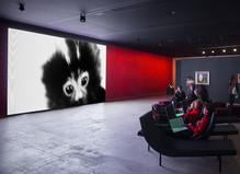 Les Habitants - Fondation Cartier pour l'art contemporain
