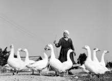 Raed Bawayah - MEP