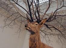 Grand opening of the new gallery in Paris - Paris-Beijing Gallery