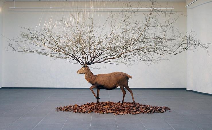 Deer bd large2