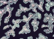 Mind The Earth - Le Bicolore