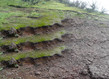 Nicolas tourte vue stratigraphique 2016 laure roynette grid