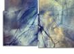 Bruno albizzati composites galerie la forest divonne grid