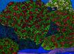 Vincent bioules dans un jardin 1 grid