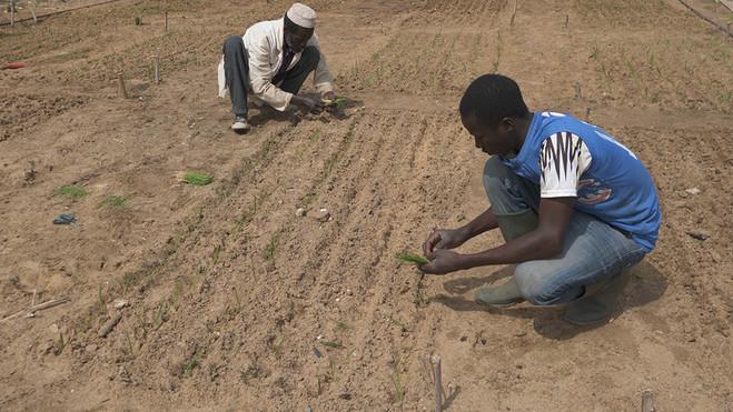 Soils Affinities - Les Laboratoires d'Aubervilliers