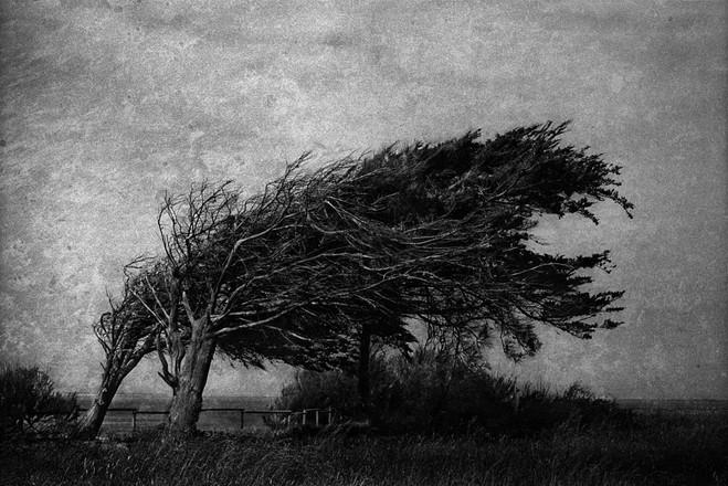 Yusuf Sevinçli - Galerie Les filles du calvaire