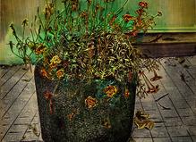 Des fleurs pour Valentin - Catherine Putman Gallery