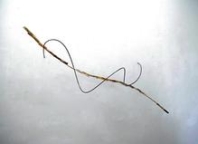 Pororoca - Laure Roynette Gallery