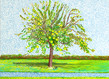 David hockney appletreehd 1 grid