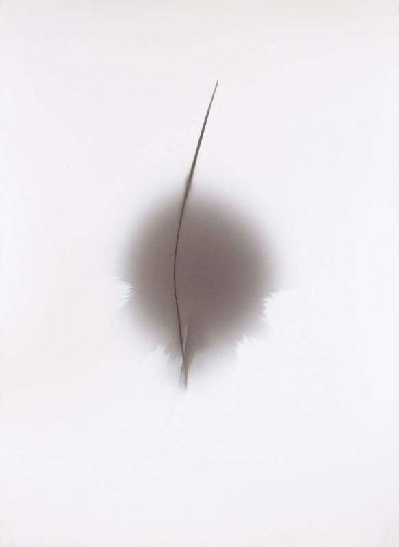 Thomas Paquet - Galerie Thierry  Bigaignon