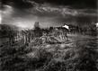 Toscane champ de vigne original grid