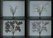 Srousseausans titre l arbre et son ombre  grid