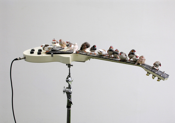 Céleste Boursier-Mougenot, From Here to Ear (version 4), 2007