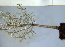L'arbre de vie au Collège des Bernardins