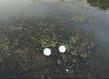 Pluvinage mirifique grid
