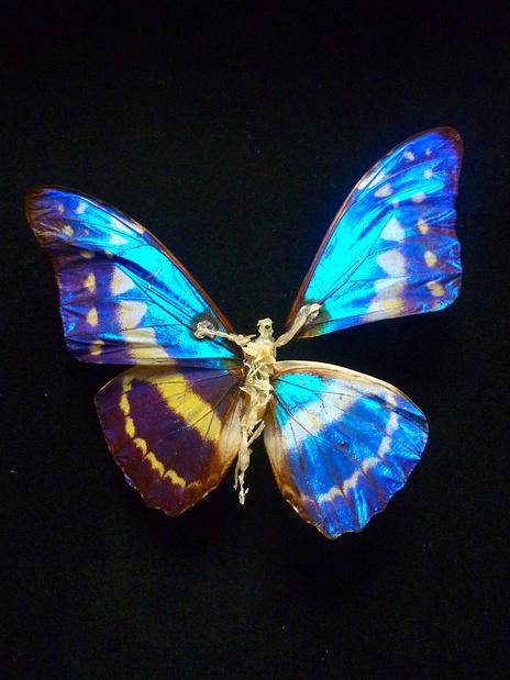Sombre re paration papillon de claire  medium