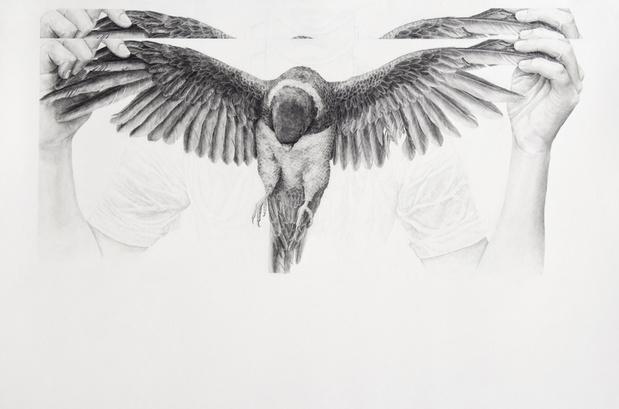 Daniel otero torres perroquet galeriemarineveilleux medium