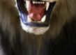 Jeu de paume kapwani kiwanga maji maji lion empaille grid