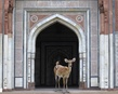 The messenger purana quila new delhi copy tiny