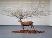 Deer bd grid