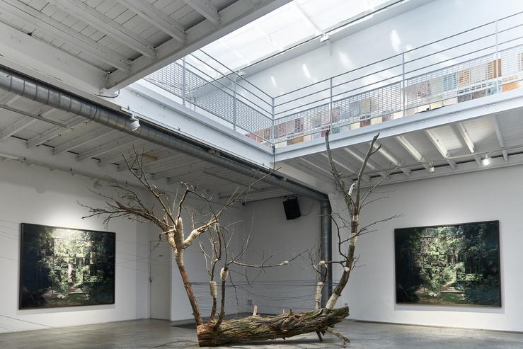 Vue de l'exposition À quoi rêvent les forêts ? à la galerie Les filles du calvaire
