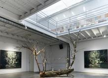 À quoi rêvent les forêts ?—Galerie Les filles du calvaire
