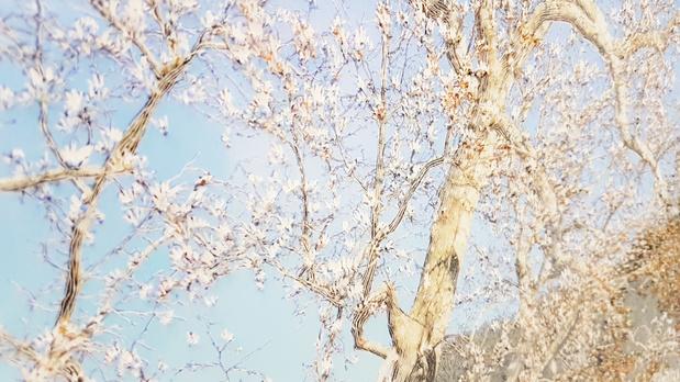 Raphaelle peria  galerie papillon paris 2 medium