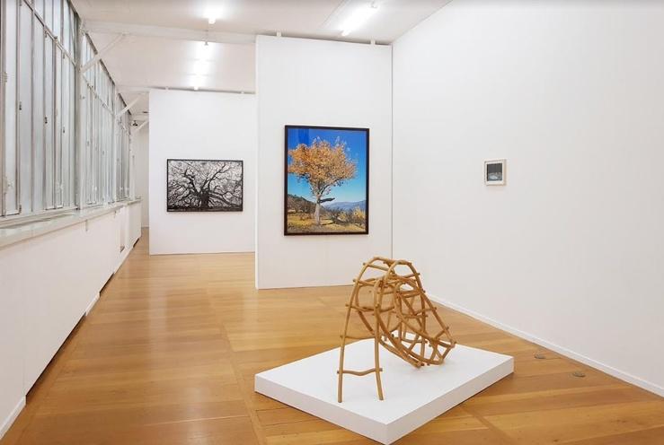 Echoing Trees, Vue de l'exposition à la galerie Xippas, Paris, 2019