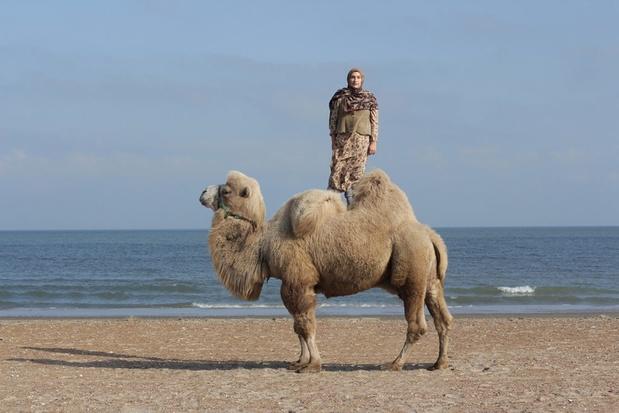 Super taus camel lo res1 1024x683 1 medium