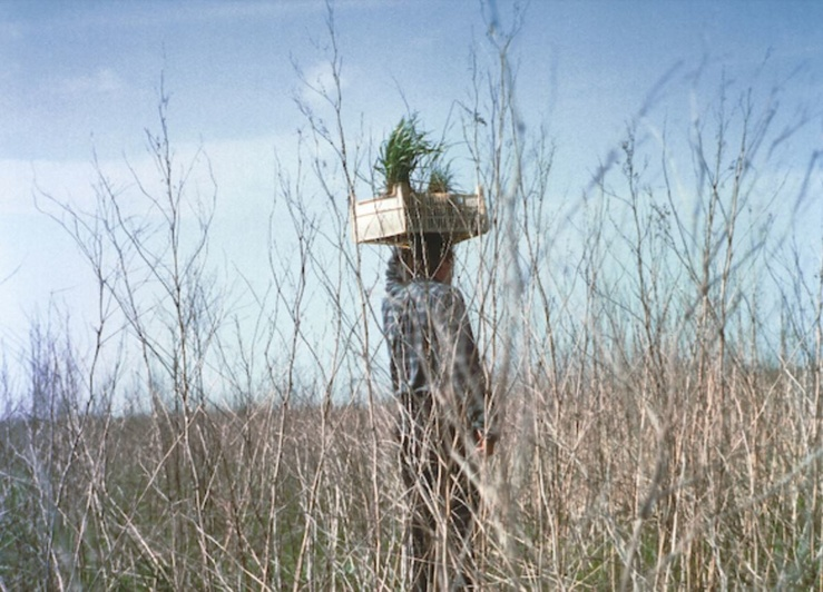Lois Weinberger, Area external, (détail), 1996 — Photographie,100 x 70 cm