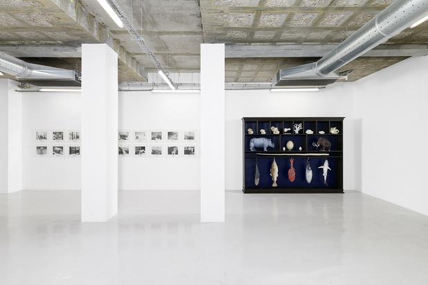 Galerie in situ fabienne leclerc komunuma site gisfl 2021 mark dion 014 1 medium